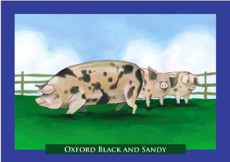 Oxford Black and Sandy