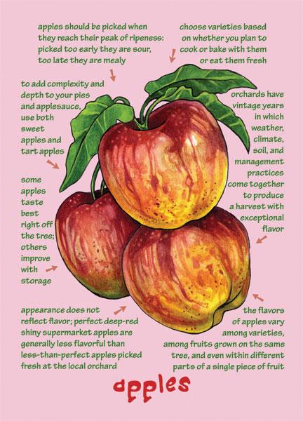 Understanding Flavor Fruit Note Cards