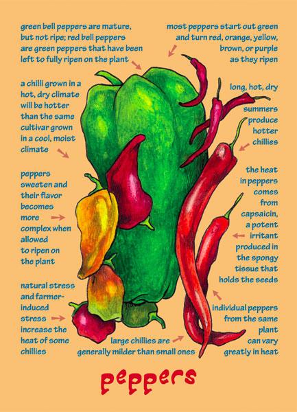 Understanding Flavor | Fruit Note Cards