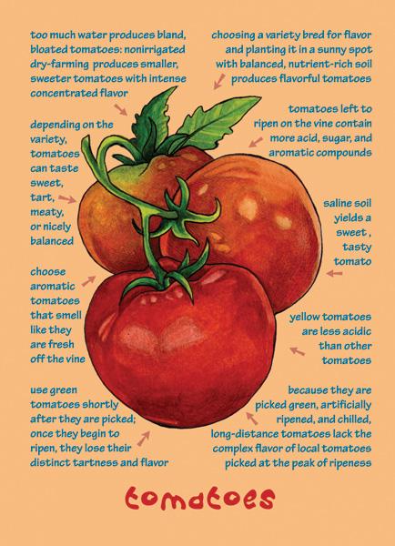 Understanding Flavor Vegetable Note Cards