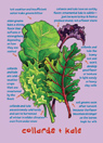 Collards & Kale Note Card
